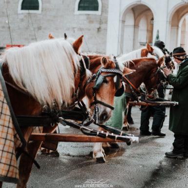 Salzburg Altstadt Pferde